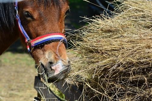 : Vitamin- & Mineralstoffbedarf alter Pferde – Pavo Ratgeber