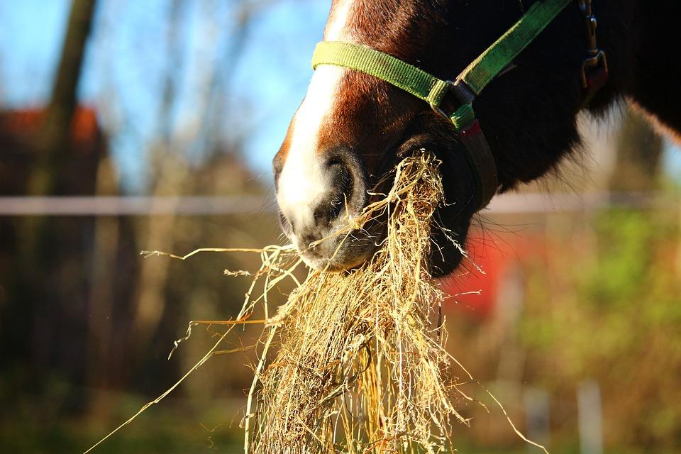 Die Fütterung von Pferden mit Kissing Spines