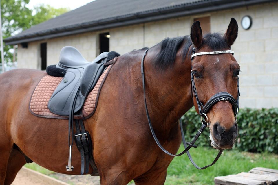 Pferde mit Kissing Spines reiten