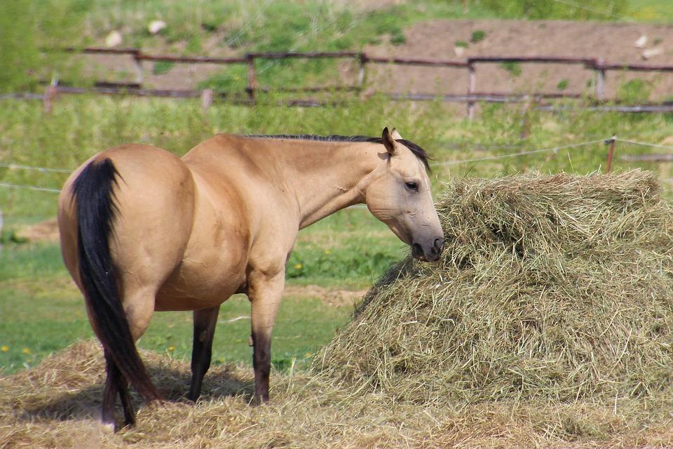 Fütterung von Pferden mit Kotwasser