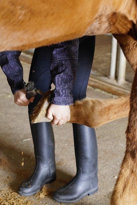 Shivering bei Pferden – Pavo Ratgeber