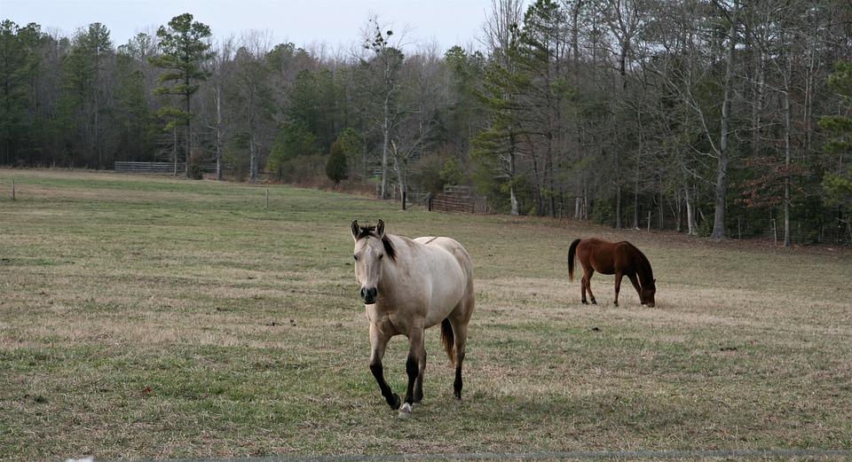 Pferdehaltung beim Shivering Syndrom